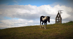 Sunday, on a rebel mood (PURIFM) Tags: horse church sky field animal caballo campo iglesia galicia aguís ourense