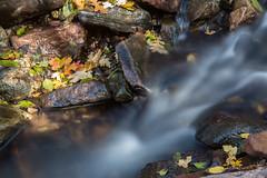 Little bitty creek in autumn (Squirrel Girl cbk) Tags: 2018 arizona october workmancreek autumnleaves flowingwater payson unitedstates us