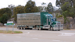 Yass Stock (2/3) (Jungle Jack Movements (ferroequinologist)) Tags: western star kenworth yass nsw new south wales australia stock cattle sheep livestock hume highway lachlan valley hp horsepower big rig haul haulage freight trucker drive transport carry delivery bulk lorry hgv wagon road nose semi trailer deliver cargo interstate articulated vehicle load freighter ship move roll motor engine power teamster truck tractor prime mover diesel injected driver cab cabin loud rumble beast wheel exhaust double b grunt pinehill lawrence murphys