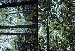 Olympus Pen-F Color Test (DaseinDesign) Tags: olympuspenf halfframephotography 35mm kodakportra160 maine mainecoast