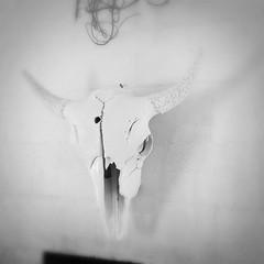 The Skull (pam's pics-) Tags: ca california us usa america hipsta hipstamatic joshuatreecalifornia airbnb art bw blackandwhite pamspics pammorris skull artistic wallart appleiphone iphone5s cameraphone mobilephonephotography cellphonephotography desert bones californiaroadtrip2015