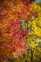Green Bay Fall Colors-4