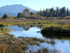 Schumaker Bay Estuary 2 (Shelley Penner) Tags: vancouverisland autumn estuary schumakerbay water mountains trees