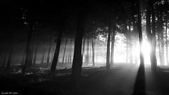 Bosque encantado BN (Guido De León) Tags: bosque guatemala blanconegro amanecer