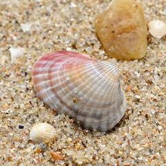 96682172 (aniaerm) Tags: sea coastalfinds sand