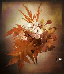 Autumn bouquet (JAKE473) Tags: acer hydrangea leaves flowers