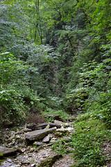 _Sochi_Uschele_Agura_2009_07_09 (Бесплатный фотобанк) Tags: gorge krasnodarkrai river russia sochi агура краснодарскийкрай сочи россия ущелье река природа nature гора большойахун