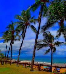 Kamaole Beach Park III (Kirt Edblom) Tags: maui mauihawaii kiheihawaii kihei beach park gaylene sand wife tree trees milf blue bluesky bluewater windy scenic serene soft clouds landscape seascape ocean pacific pacificocean green grass countypark kirt kirtedblom edblom easyhdr hdr luminar nikon nikond7100 nikkor18140mmf3556 2018