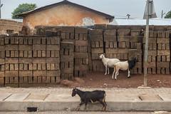 Larabanga (bruno vanbesien) Tags: ghana larabanga concrete goat stone street northern gh