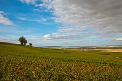 Flickr_Champagne_Verzy_Francia_09-2018_IMG_2076 (Roberto Bombardieri) Tags: francia france champagne vigne uva vino nuvole cielo