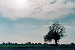 Wer jetzt kein Haus hat, baut sich keines mehr. (auqanaj) Tags: 201809bis20180909 kodacolorvr400plusexpired032009 nikonfm2n nikonnikkor50mm114ais cewescanat72dpi rainermariarilke herbsttag 2191902 paris gedicht poem analog film expired tree baum feld field sky himmel stimmung mood blue birnbaum birne pear sun sonne clouds wolken herbst autumn fall