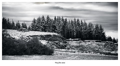 Very first snow (memories-in-motion) Tags: bäume eifel kälte natur vulkaneifel wald winter forest snow trees first landscape cold