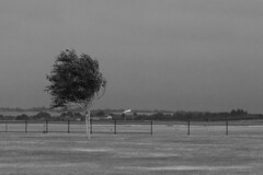 No Flying Today (alicejack2002) Tags: wind tree windsock airfield duxford