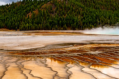 Prismatic - Yellowstone National Park - Fall 2018-64.jpg (jbernstein899) Tags: textures trees seismic colorful green gold yelow steam water patterns mountains grandprismatic yellowstonenationalpark geothermal orange wyoming