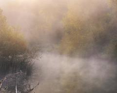 Mist on the Thames (willblakeymilner) Tags: mist nikon d810 river tamron mood beautiful tree water calm bush oxfordshire england uk thames whittenham little tranquil