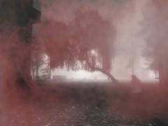 lonely old woman (wojciechpolewski) Tags: oldwoman fog foggy morning blacknwhite blackandwhite bnw bw monochrome monochromatic monochromatico monotone wpolewski
