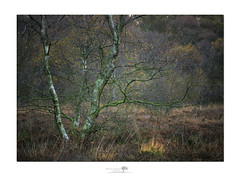 Brimham (shaun.argent) Tags: woodland woods trees tree heath autumn shaunargent seasons nature nidderdale
