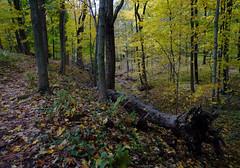 Ravine and Blue Trail (Dendroica cerulea) Tags: stream ravine foliage trees landscape autumn rutgersecologicalpreserve livingstoncampus rutgersuniversity middlesexcounty nj newjersey
