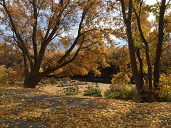 IMG_2807 (August Benjamin) Tags: provo provoriver provorivertrail fall utah mountains provocanyon fallcolors autumn trees leaves orem utahvalley jogging