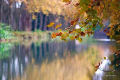Canal du midi (jpto_55) Tags: platane canaldumidi automne bokeh fuji fujifilm xt20 omlens om135mmf28 hautegaronne france flickrunitedaward