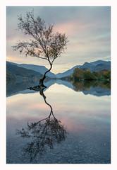 Llyn Padarn - Llanberis I (Christopher Pope Photography) Tags: wales snowdonia sunrise llanberis dawn mountains llynpadarn lake reflections northwales singletree