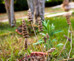 Nature (maysaborges) Tags: nature green grass leaf sunlight copse plant