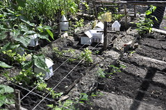 A model farm designed by Raphael Odwaro, a lead farmer in Homa Bay County, Kenya