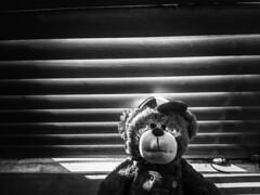 strange bear (Cosentino Aran) Tags: noir blackandwhite horror teddy bear strange shadow light