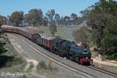 Winding Wambool (Henry's Railway Gallery) Tags: 6029 ad60class garratt steamlocomotive steamtrain heritagetrain thnsw transportheritagensw passengertrain 6s65 wambool