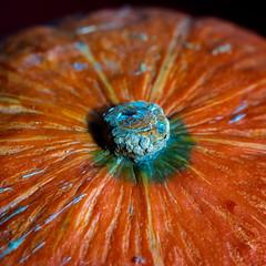 wrinkled pumpkin (HMM !) (ralfkai41) Tags: crinkledwrinkledfoldedorcreased macromondays makro autumn food wrinkledpunpkin herbst kürnis vegetables wrinkled nahrungsmittel faltig crinkled foldedorcreased gemüse