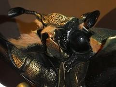 20180ttArthropoda-Calci (17) (Naturalmentescienza) Tags: artropodi insetti coleotteri farfalle fasmidi ragni