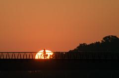 Here comes the sun (beeldmark) Tags: fiets brug silhouette zonsopkomst woonwerk commute sunrise bicycle bridge cycling fietsen nieuwegein utrecht nederland nl beeldmark pentax k5 smcpentaxdal55300mmf458ed smcpda55300mmf458ed