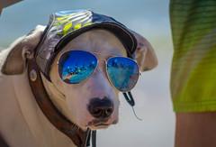 Cooper (Robert Borden) Tags: cooper sunglasses hat dog cooldog huntingtonbeach huntington la losangeles cali socal california dogsurfing animalportrait canon canonrebel canonphoto beach coast