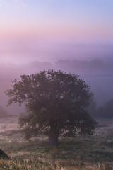 Across the marsh (SimonMastersPhotography) Tags: romneymarsh tree one lone oaktree mist light sunrise scenic nobody