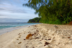 Life's a Beach (Mindful Imagery) Tags: la digue seychelles