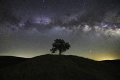 Alone at the Top (Omnitrigger) Tags: tree night milkyway california nightphotography galaxy stars longexposure nature hill
