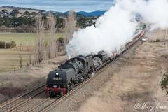 Gap at Goulburn (Henry's Railway Gallery) Tags: 6029 ad60class garratt steamlocomotive steamtrain heritagetrain thnsw transportheritagensw passengertrain 6s80 goulburn
