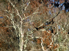 Impossible Forest (andressolo) Tags: reflection reflections reflect reflejos reflejo river ripples río water abstract abstracto trees distortions distortion forest agua