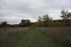 IMG_6338 (sjj62) Tags: fishcreekwi doorcountywi fall autumn woods doorcounty fishcreek 40d