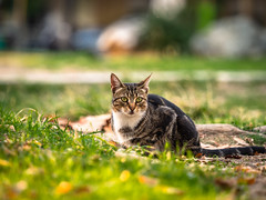 Cat (asamoal2) Tags: explore exploring outdoor outdoors out outside green leafs animal bokeh olympusomdem10mark2 olympus40150pro getolympus olympusomd park closeup nature naturephotography animalphotography catphotography