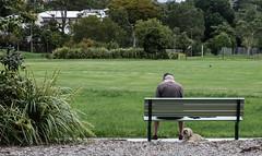 Time Out (idunbarreid) Tags: park man dog bench foliage