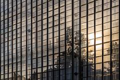 Bauhaus Dessau, glass façade detail of workshop wing (Alexander Dülks) Tags: 2018 lines dessau window sonne sonnenuntergang radiator bauhaus glassfaçade linien chain kette reflektion façade sun reflection glas spiegelung steel fassade architecture sunset fenster waltergropius glass glasfassade gropius architektur heizkörper germany