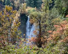 Falls_119980 (gpferd) Tags: plant tree water waterfall burney california unitedstates us