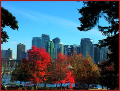 Autumn Cityscape (FernShade) Tags: vancouverbc stanleypark stanleyparkseawall autumntrees autumnfoliage fallfoliage cityscape scenery scenic city tree buildings architecture park sky skyline
