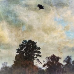 Vultures (jeanne.marie.) Tags: trees cloudy sky iphone7plus iphoneography textured autumn circling flying lake mydailywalk vultures