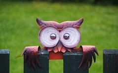 Schönes Wochenende! [Explored Oct 12, 2018] (G_E_R_D) Tags: eule owl lachouette lacivetta zaun fence smileonsaturday seasonsflora