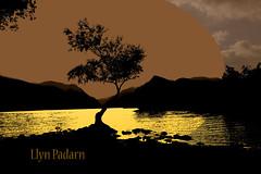 Llyn Padarn (ginger_scallywag) Tags: wales llynpadarn lonleytree photoshopped tree canon 7d