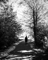 dark to light (bluechameleon) Tags: sharonwish autumn blackandwhite bluechameleonphotography darkness foliage forest light lostlagoon man nature path person shadows silhouette trail trees vancouver