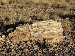 Petrified Forest NP (Zruda) Tags: arizona geo:lat=3481667232 geo:lon=10983414523 geotagged headquarters petrifiedforestnatlpk unitedstates usa