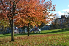 Autumn in Crab Park (eaglelam89) Tags: gastown vancouver bc canada autumn 2018